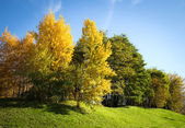 Autumn trees against the blue sky — Stock Photo