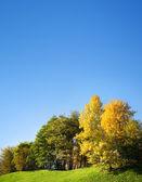 秋天的树木对蓝蓝的天空 — 图库照片