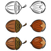 Cartoon set of vector images of hazelnut and acorn. eps10 — Stok Vektör
