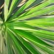 Pattern of palm leafs — Stock Photo #14344373