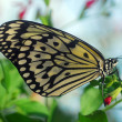 Butterfly on a green leaf - ストック写真