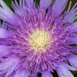 Beautiful purple flower - ストック写真