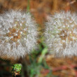 White fluffy flowers - ストック写真