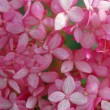 Background of pink flowers - ストック写真