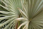 Pattern of palm leafs — Stock Photo