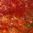 Stock Photo: Red leaves against blue tree