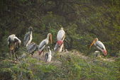 A flock of storks — Stock Photo