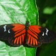 Royalty-Free Stock Photo: Red black butterfly on a green leaf