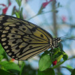 Black yellow butterfly on green branches — Stock Photo
