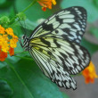 Yellow and black butterfly on a green leaf — Stock Photo