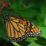 Orange butterfly — Stock Photo #19336455