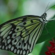 An isolated shot of  Butterfly insect feeding on flower - Stock Photo