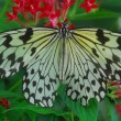 An isolated shot of Butterfly insect feeding on flower — Stock Photo #19338027