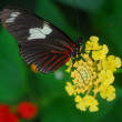 An isolated shot of orange tiger Butterfly insect feeding on flower - Stock Photo