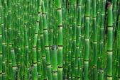 Horsetail Equisetum plant with dark green segmented stems also called scouring rush — Stock Photo