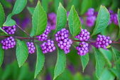 Purple plant on a green branch — Stock Photo