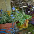 Purple flowers in pots — Stock Photo