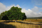 Trees in a field along the road — Stock Photo