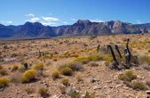 Red rock canyon — Stockfoto