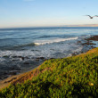 Stock Photo: LJollCoast California