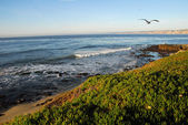 La Jolla Coast California — Stock Photo