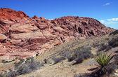 Red rock canyon — Stok fotoğraf