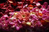 Spa aromatherapy — Stock Photo