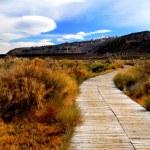 Grand Canyon Landscape — Stock Photo #25800089
