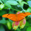 Stock Photo: Orange Butterfly insect