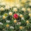 Pink flower on cactus plant — Stock Photo