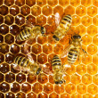 Bees work on honeycomb - Stok fotoğraf