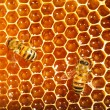 Bees work on honeycomb — Stock Photo #13153407