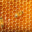 Bees work on honeycomb — Stock fotografie #13153415