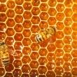 Bees work on honeycomb — Stock fotografie