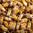Bees work on honeycomb — Foto Stock