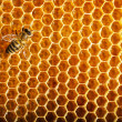 Bees work on honeycomb — Stock fotografie #13153428