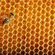 Bees work on honeycomb — ストック写真