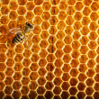Bees work on honeycomb — Stock Photo #13153438