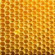 Ready honeycomb with sweet honey — Stock Photo