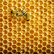 Bees work on honeycombs with sweet honey — Stock Photo