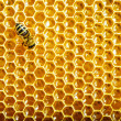 Bees work on honeycomb — Foto de stock #13153478