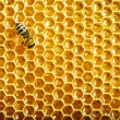 Bees work on honeycomb — Stock Photo #13153478