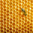 Bees work on honeycomb — 图库照片 #13153488