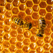 Close up view of the working bees on honeycells. - Stok fotoraf