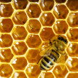 Bees work on honeycomb with sweet honey -  