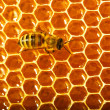 One bee works on honeycomb — Foto de Stock