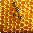 Bees work on honeycomb — Stock Photo #13153512