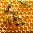 Bees works on honeycombs - Stock Photo