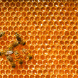 Bees work on honeycomb — Stock Photo #13153526
