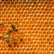 Bees work on honeycomb — Stock fotografie #13153526